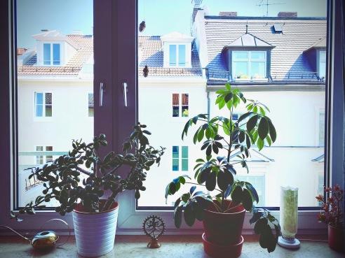 Livingroom w/ a view / Pflanzen im Fenster / München